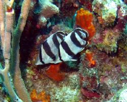 Taken at East end of Grand Cayman August 2006 with a Cano... by Bonnie Conley