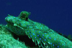 Flounder, Curacao, Sea and Sea DX5000. by David Heidemann
