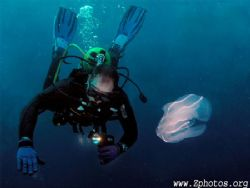 My dive buddy astutely observing water while a comb jelly... by Zaid Fadul