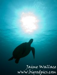 I love turtles! by Jaime Wallace