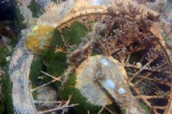 The Bermuda Triangle strikes again! Coral growing on a co... by Dr Evil