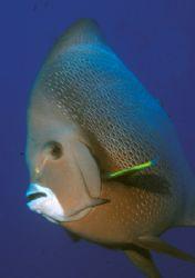 Angel fish in La Conga Yabucoa P.R. Nikon N90 20mm wide l... by Candido Gonzalez-Alonso