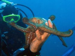 Octopussy - Isola d'Elba Canon Digital Ixus 700 - Case WP... by Riccardo Colaiori