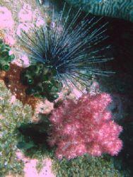 Soft Coral - Muscat / Daymaniyat islands September 2006 by David Johnson