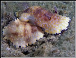 "Underwater romance! ""I love you"" the little one is saying... by Yves Antoniazzo"