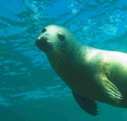 Another Scilly seal - ambient light and d70s with 12-24mm... by Malcolm Nimmo