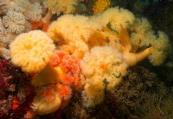 A bouquet of Plumose anenomes - Using D70S 12-24mm lens.... by Malcolm Nimmo