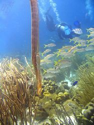 """Reef photo with natural light taken at """"Rock Pile"""" on Kle... by Brian Mayes"""