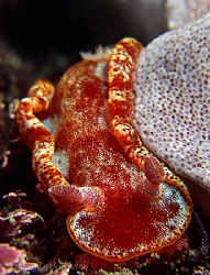 Extra red nudi in Taiwan today !! by Alex Tattersall