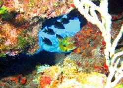 Taken this August at Snapper Hole with a Canon PowerShot ... by Bonnie Conley
