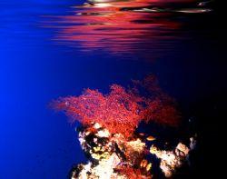 'in the shallows' d100; 24mm nikkor lens; png. Enjoy!. by Rick Tegeler