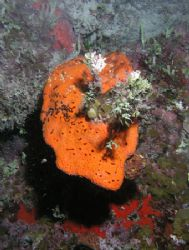 Coral, camera olympus c-5050,ikelite housing,ds-125 ikeli... by Ray Eccleston