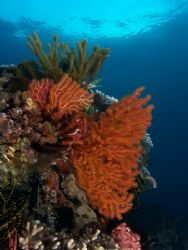 Coral Colors at Dawn by Nick Hobgood