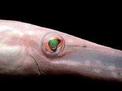 The Eye! Taken in Mabul Island. by Ed Eng