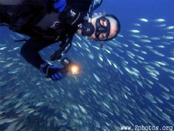 My dive buddy in front of a large school of juvenile Tomt... by Zaid Fadul