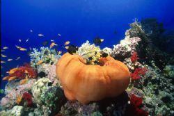 anemone by Virga Riccardo