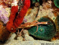 This crab is ready to take on the world =) by Zaid Fadul