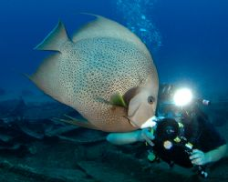 Angelfish, photographer, and slave strobe. D70, 10.5 mm f... by David Heidemann