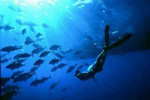 open sea,Nikonos V 15mm lens by José Augusto Silva