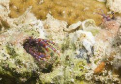 Hermit Crab colony by Grant Farquhar