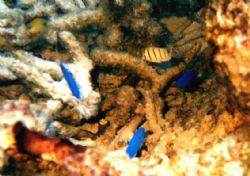 Sea life in Savaii, Samoa. by Belinda Williams