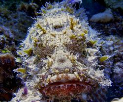 Scorpionfish. Key Largo, Florida. Sea and Sea DX3000. by David Heidemann