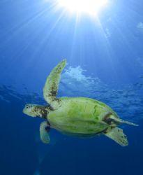 Turtle @ Sipidan by Paul Hunter