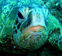 cool turtle. by Elizabeth Chase