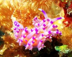 Purple is my favourite color! Taken at Vietnamese Wreck, ... by Mohan Thanabalan