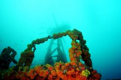 Corals on the Duane wreck, with crows nest in background. by Michael Salcito