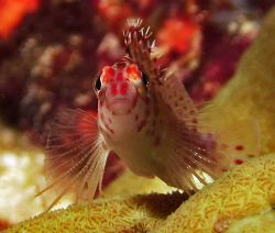 Taken at Similan Islands March 06 with Reefmaster DC 500 ... by Patrick Neumann