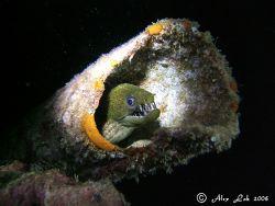 moray eel by Alex Lok