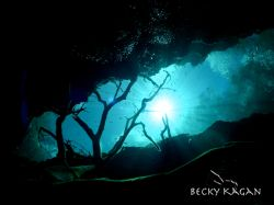 Mayan blue cenote...taken with no stobes at the moulth of... by Becky Kagan
