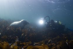 Mark with a seal,not sure who's watching who.. 16mm,D200. by Derek Haslam