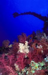Soft corals on the Aida wreck. Big brother. F50, 20mm. by Derek Haslam