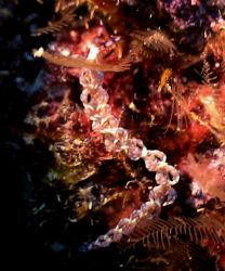 Beautiful almost transluscent nidi (I am not sure Specie... by Marylin Batt