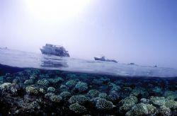 Under/over Red sea,Nikon f90x in aquatica housing,fish-ey... by José Silva