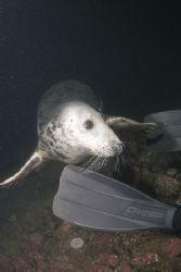 Grey seal. Inner Farne isles. D200, 10.5mm. by Derek Haslam