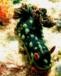Kurbane's nembrotha...taken at Dayang Island by Mohan Thanabalan