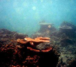 Paradice Cove, Western Samoa by Belinda Williams