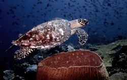 Turtle and sponge by Chris Wildblood