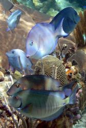 school of fish at the corral gardens reef by Andrew Kubica