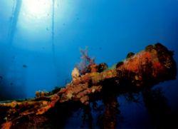 Arm on wreck in Red Sea off Jordan. Nikonos V 28mm lense by Marylin Batt