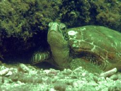 """""""Turtle Nap"""" by Nicolas Pohl"""
