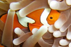 thank goddness i found nemo by Petra Kuzev