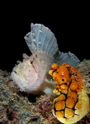 White Leaf fish and a yellow ascidian squirty thing... E9... by Alex Tattersall