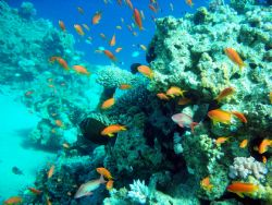diving in the beautiful RedSea in Sharn El Sheikh by Petra Kuzev
