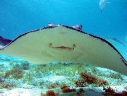 Smile....say Stingray! by Carlos Valenzuela