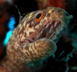 tiny eel, off waikiki near turtle canyon by Elizabeth Chase