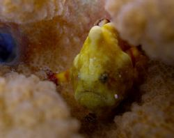 frog fish by Elizabeth Chase
